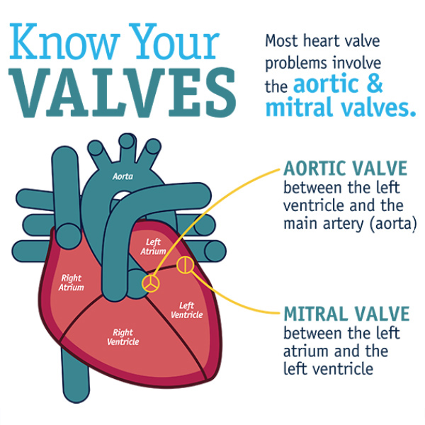 Celebrate National Heart Valve Disease Day on Feb. 22 - American College of  Cardiology