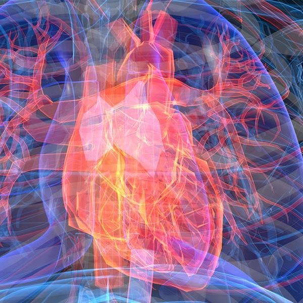 Closeup image of a 3D heart; Conceptual Image
