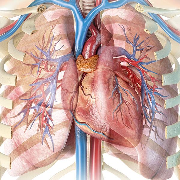 Atrial Fibrillation, AFib, closeup illustration of heart; Conceptual Image