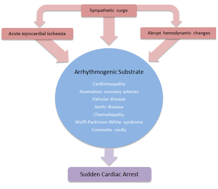 cardiac arrests in sports Conditions resulting in sudden death in organized sports background: cardiac conditions, head injuries, neck in-juries • sudden cardiac arrest regarding the most common causes of sudden death in sports.