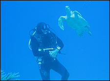 Divers and Coronary Disease